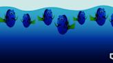 研究指海洋溶氧量跌 魚類遷淺水區 憂增過度捕撈風險 | 立場報道 | 立場新聞