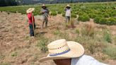 The US farmworker shortage spurs farmers to lobby for immigration reform