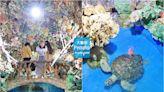 【澎湖景點】太夢幻!大義宮珊瑚海底王國,唯一合法養海龜的藍色海底世界~