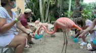 Feeding the Flamingos at the Palm Beach Zoo