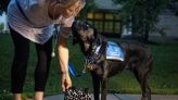 Service dogs navigate the challenges of covid: 'The dog doesn't understand social distancing'