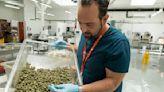 Green Rush: Cannabis equity program elevates unexpected entrepreneurs - The San Francisco Examiner