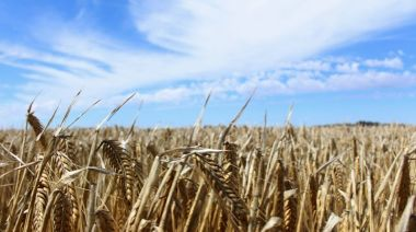 Australia considering WTO appeal against China barley tariffs as tensions rise