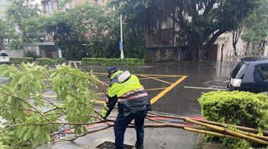 彩繪巷口路樹傾倒 苓警巡邏驚見冒雨排除