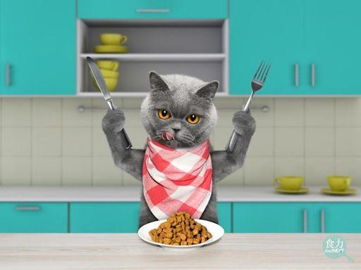 貓咪經濟學正夯!五大重點掌握貓經濟產業趨勢