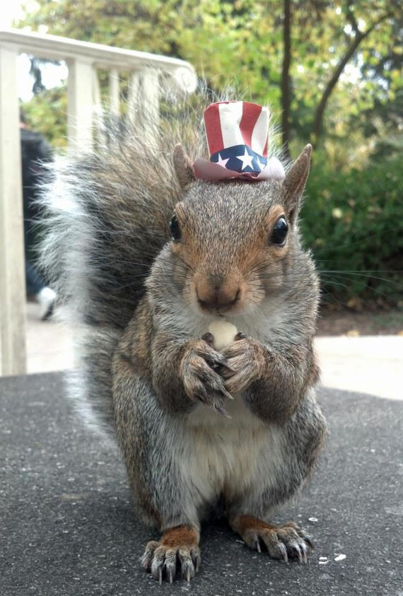 Sneezy The Squirrel, Wearing Hats | Incredible Things