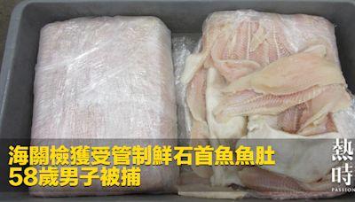 海關檢獲受管制鮮石首魚魚肚 58歲男子被捕