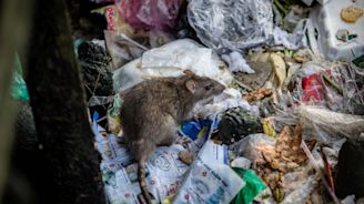 Second human case of rat hepatitis discovered in Hong Kong