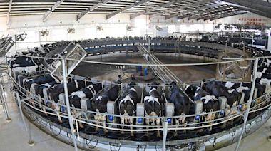 大陸|缺奶!牧場投資熱 - 工商時報
