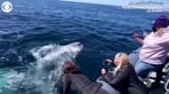 WEB EXTRA: Close Encounter With Gray Whales