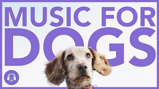 Music For Dogs: 15 Hours of Dog Relaxation!