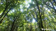 How trees help us with carbon dioxide