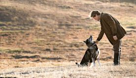 The 10 Best Dog Movies Ranked, Including Togo