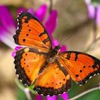 Butterfly by Flickr user EcoTraVolS
