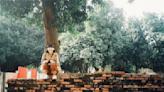 台南文青復古風輕旅行 最夯網美景點就在「這裡」