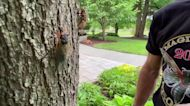 Professor makes case for embracing cicada invasion