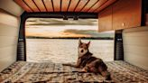 Want To Take Your Pooch on a #VanLife Adventure? Here's How To Make It Happen