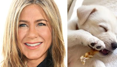 Jennifer Aniston's New Puppy Lord Chesterfield Is Ridiculously Cute