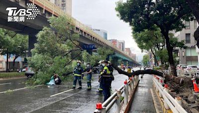 20公尺高路樹突倒塌!行進中機車遭壓垮 2人受傷送醫