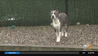 Group Of New Jersey Lawmakers Introduce Bill Requiring Owners Of Large Dogs To Install Fencing