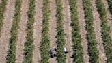 Sicilian mafia ripped off millions in EU farm aid, Italian police say
