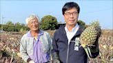 《高雄》銷中路斷 陳其邁:啟動鳳梨農補助