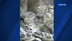 San Francisco Zoo offers adopt-an-animal gifts for Valentine's Day