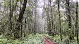 Australia's Newest 'Great Walk' Is a Multiday Hike Through the World's Largest Subtropical Rain Forest