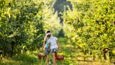 The South's Best Apple-Picking Orchards, According to Yelp Reviews