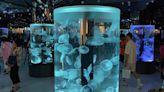 水族館Xpark海底生物遭控傷痕累累,官方回應:絕無虐待,人與生物的生活習性不同 - The News Lens 關鍵評論網