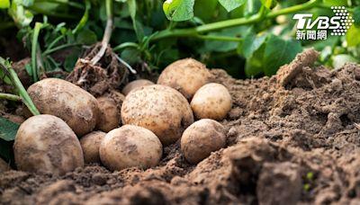 馬鈴薯、花生發芽能吃嗎?專家警告這食物:吃了恐中毒│TVBS新聞網