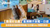 【香港好去處】荃灣親子放電一日遊 全新香港兒童探索博物館/日式貓Cafe/ 懷舊玩具店