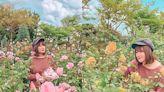 透氣賞花拍美照!玫瑰花海都市花園秘境!