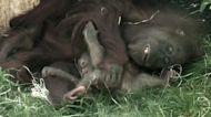 Prague Zoo celebrates baby boom