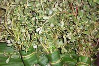 芳姐保健湯餸 » Blog Archive » 生蛇食療—馬齒莧綠豆薏米湯