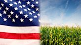 How America became dependent on corn is a weird story of genetics and politics