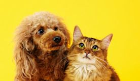 Coronavirus pandemic sees huge increase in dog and cat adoptions