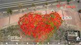 台南鳳凰花大爆發 空拍呈現超酷紅色愛心