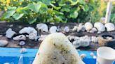 吃飽再出發!各種飛魚、芋頭料理吃好吃飽,浮潛、跳水、環島、秘境,蘭嶼我來啦!
