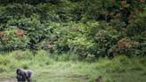 Gabon paid for protecting forests, in African first
