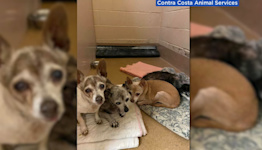 Dozens of animals rescued from hoarding activity at East Bay home