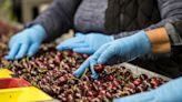 Mexico Flags U.S. Food-Plant Labor Concerns in Trade Tit-for-Tat