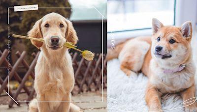 12星座適合養什麼狗狗?「雙子」充滿好奇、「處女」冷靜自持,牠的性格與你最速配! | 寵物圈圈 | 妞新聞 niusnews
