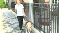 Seeing Eye Dogs Helping Visually Impaired With Social Distancing