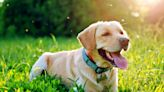 How to Keep Your Dog Safe From Mosquito Bites (and the Diseases They Carry)