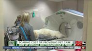 DWYM: A look at pet care costs, pet insurance