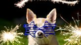 If Your Dog Experiences Fireworks Anxiety, Here's What You Can Give Them