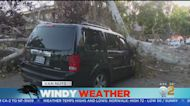 Blustery Winds Bring Down Trees Across LA