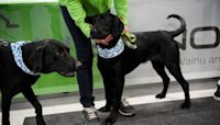 Dogs In Finland Are Being Trained To Sniff Out COVID-19 In Humans