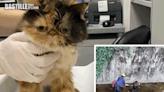 6小貓疑被棄元朗引水道 愛協救回 | 社會事
